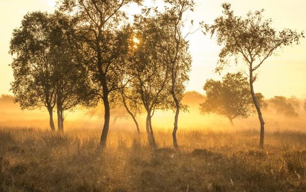 Фото обои деревья, туман, утро
