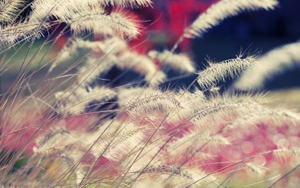 Фото обои цвета, макро, природа, фото, обои, растения, light
