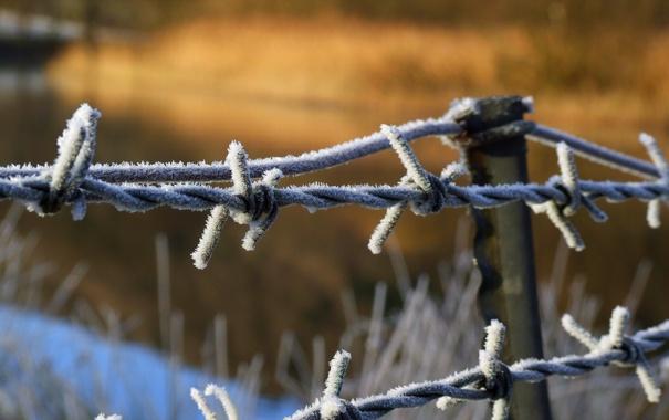 Фото обои иней, макро, забор