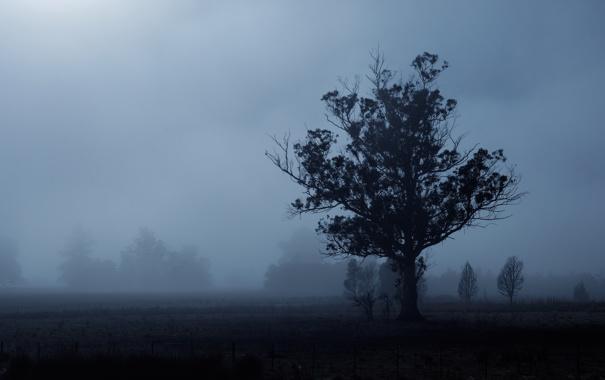 Фото обои туман, дерево, силуэт