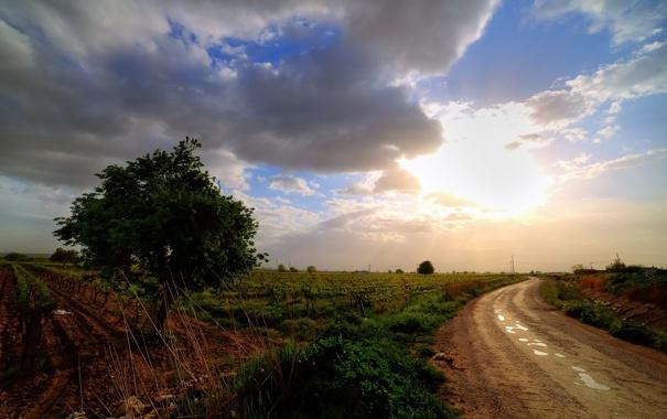 Фото обои пейзаж, поле, дорога