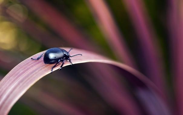 Фото обои природа, фон, жук