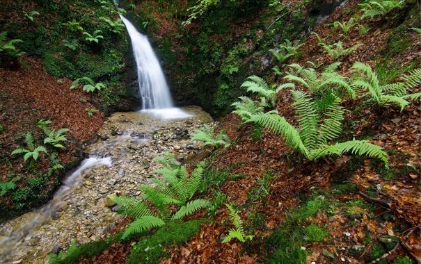Фото обои лес, деревья, природа, река, ручей, камни, водопад