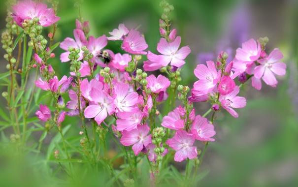 Фото обои лето, цветы, лепестки, луг