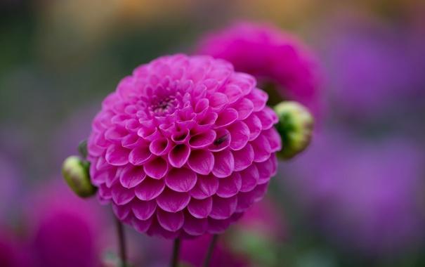 Фото обои цветок, ветка, бутон, red, алый, цветение, flower