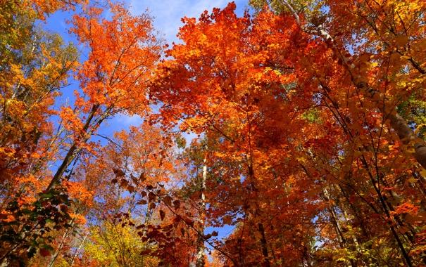 Фото обои осень, небо, листья, деревья, Канада, Онтарио, багрянец