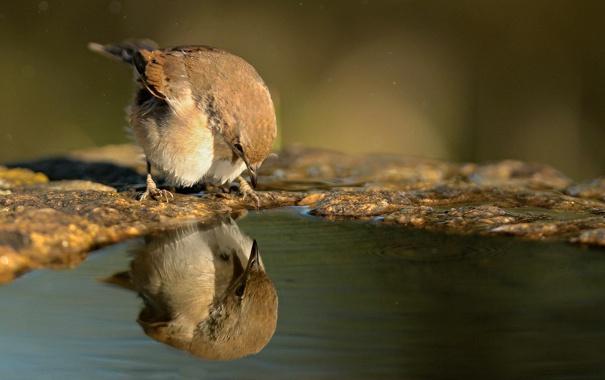Фото обои вода, отражение, птица