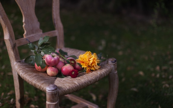 Фото обои яблоки, подсолнух, стул