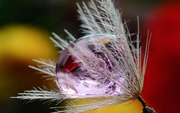 Фото обои природа, роса, капля, былинка