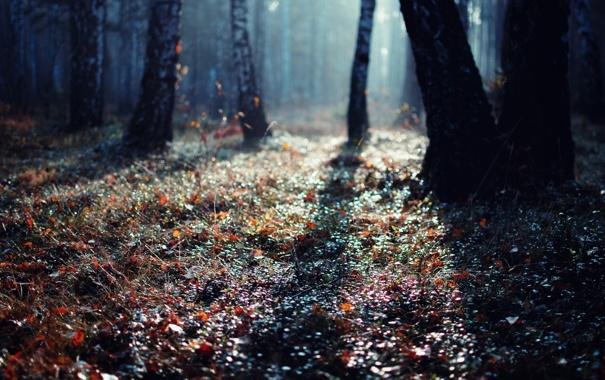 Фото обои лес, свет, деревья