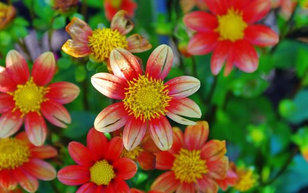 Фото обои сад, лепестки, клумба, природа