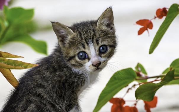 Фото обои лето, глаза, котенок, фон