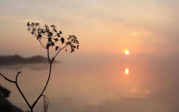 Фото обои паутинка, солнце, туман, растение, отражение, вода, утро