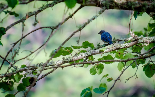 Фото обои листья, дерево, ветви, птица, боке