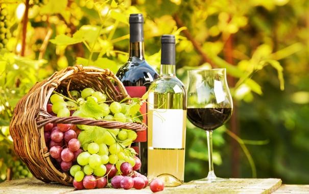 Фото обои зелень, стол, вино, корзина, бокал, сад, виноград