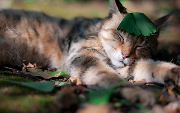 Фото обои трава, кот, усы, листья, природа, сон, тень