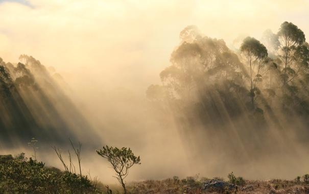 Фото обои лес, лучи, туман, тени