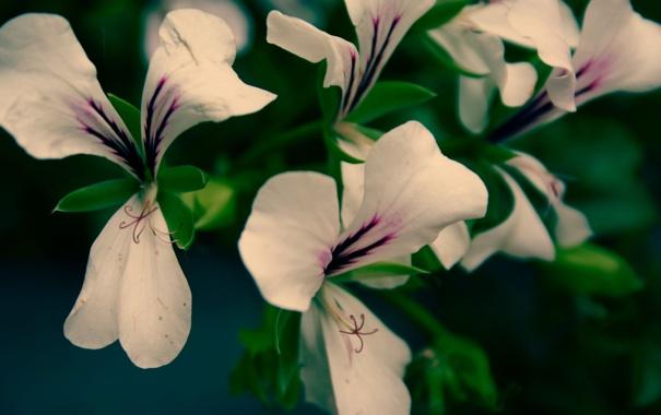 Фото обои цветок, макро, цветы, растение, лепестки