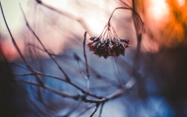 Фото обои холод, осень, макро
