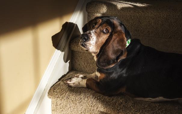 Фото обои взгляд, дом, друг, собака