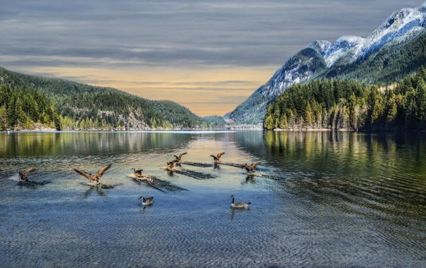 Фото обои небо, горы, птицы, озеро, Канада, гуси
