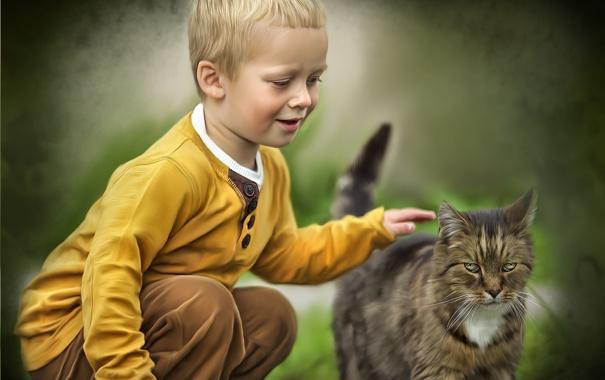 Фото обои кот, текстура, мальчик