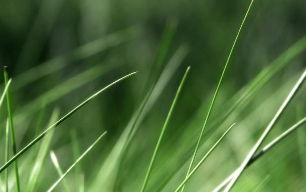 Фото обои зелень, трава, макро, природа, фото, фон, обои