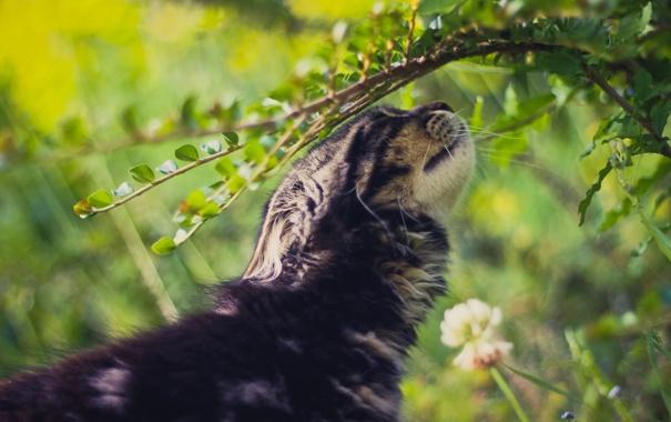 Фото обои кошка, трава, кот, кошак