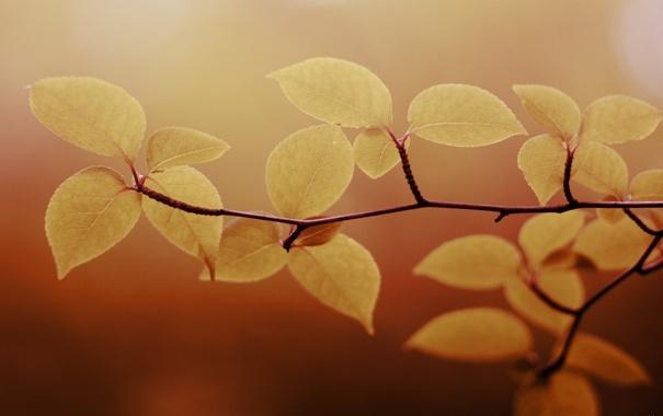 Фото обои листья, макро, природа, фото, фон, обои, растения
