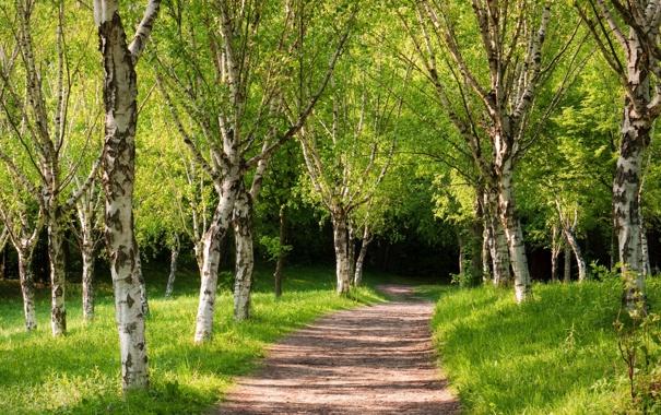 Фото обои лето, парк, дорожка, зелёные деревья