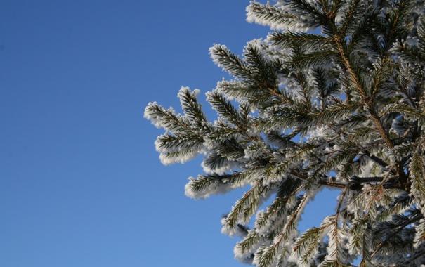 Фото обои зима, снег, синий, дерево, Елка