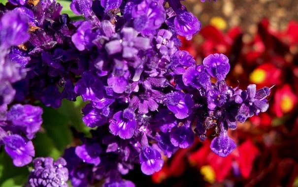 Фото обои макро, роса, фиолетовые