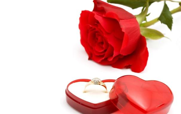 Фото обои красный, сердце, Роза, кольцо