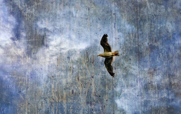 Фото обои небо, стиль, фон, птица