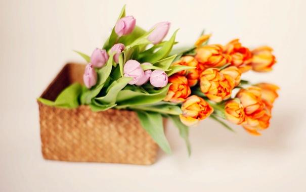 Фото обои тюльпаны, tulips, корзина, букет цветы, flowers bouquet, basket