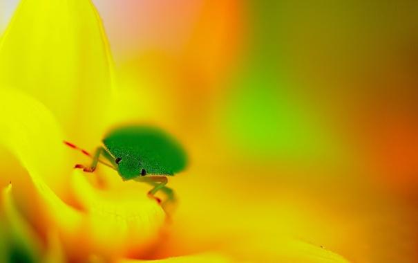 Фото обои глаза, фон, фокус, лепестки, насекомое, зелёное, жёлтые