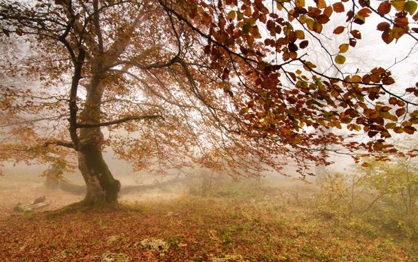 Фото обои листья, туман, дерево
