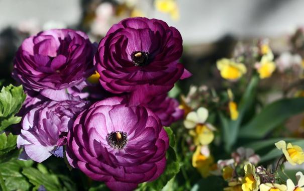 Фото обои цветы, фото, лютик