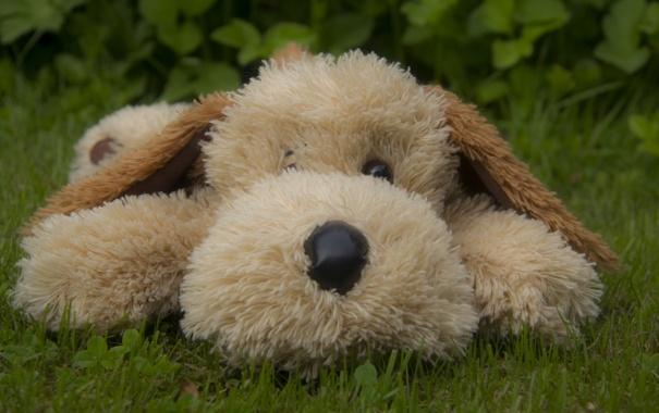 Фото обои трава, игрушка, собака