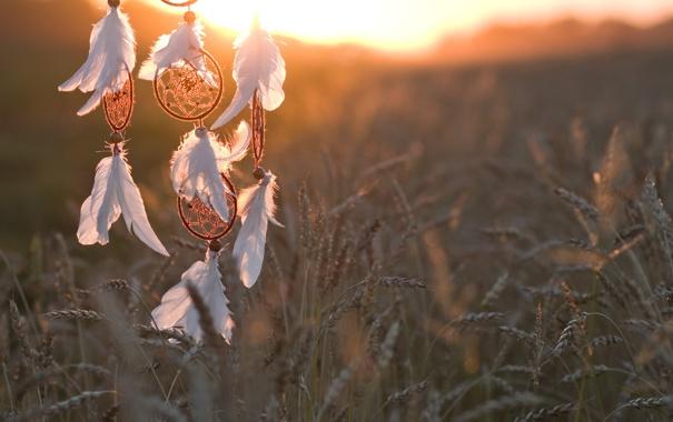 Фото обои солнце, колосья, ловец снов