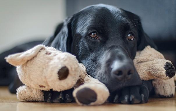 Фото обои друг, дом, взгляд, собака