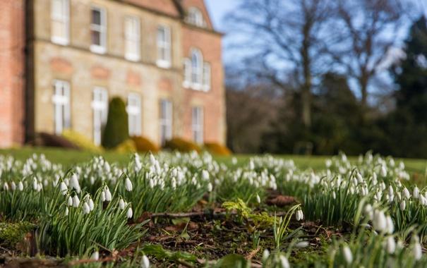 Фото обои цветы, замок, поляна, весна