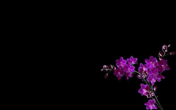 Фото обои свет, фон, обои, тень, ветка, лепестки