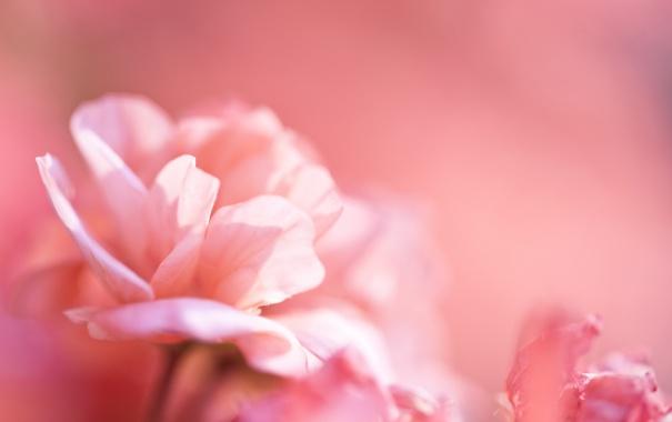 Фото обои макро, цветы, фон