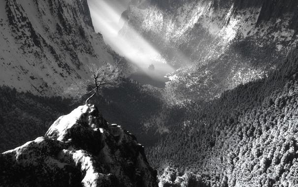 Фото обои свет, пейзаж, дерево, гора, ч.б