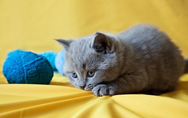 Фото обои клубок, котенок, играет
