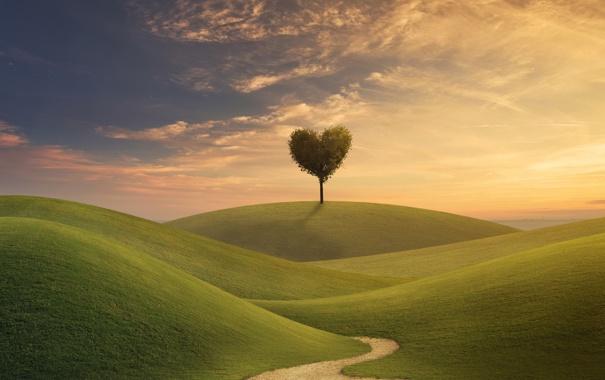 Фото обои креатив, дерево, холмы, дорожка, крона, седце