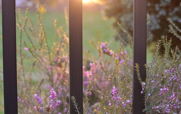 Фото обои зелень, солнце, макро, лучи, свет, цветы, природа