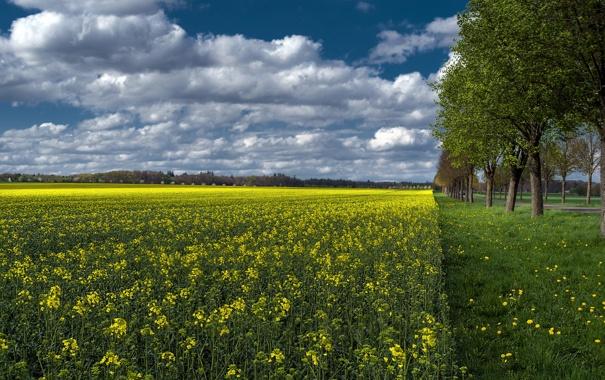Фото обои поле, небо, трава, облака, деревья, цветы, рапс
