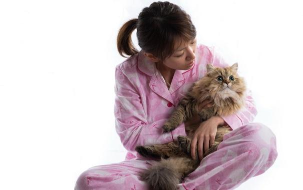 Фото обои torode, девушка, кошка